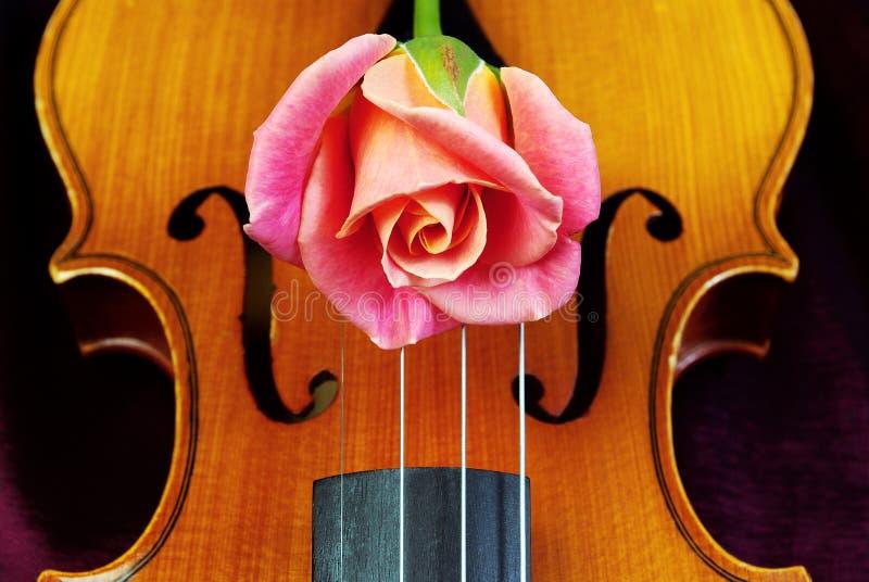 Il violino ed è aumentato closeup fotografie stock