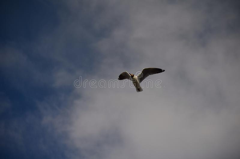 Il volo fotografia stock libera da diritti