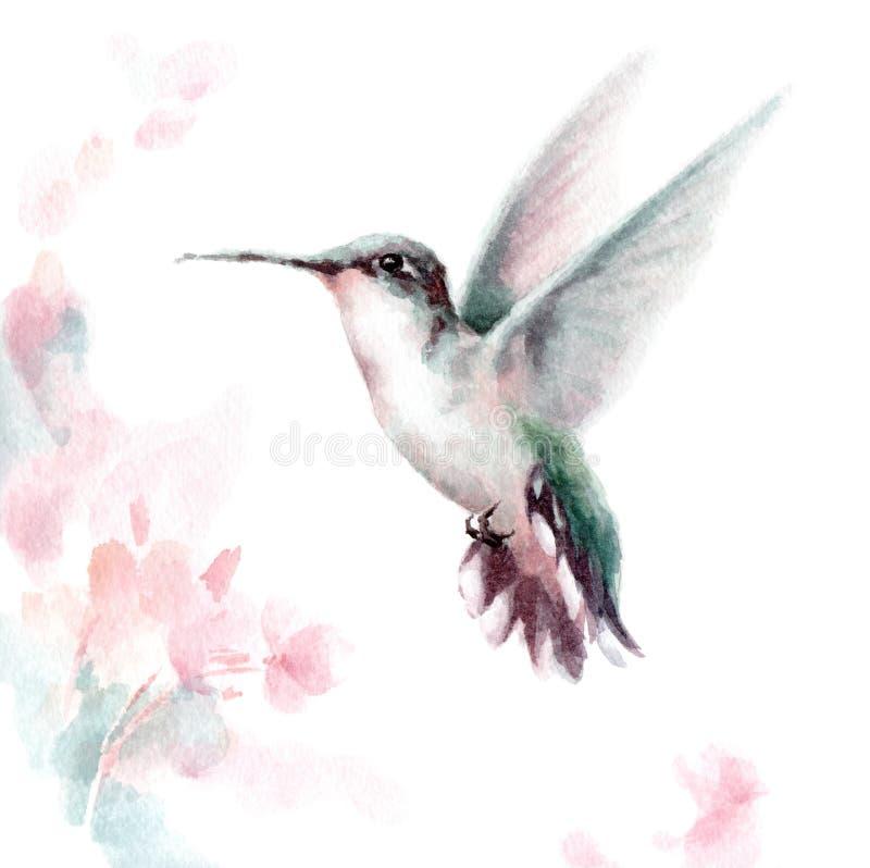 Il volo del colibrì intorno all'illustrazione disegnata a mano del giardino dell'estate dei fiori dell'uccello rosa dell'acquerel royalty illustrazione gratis