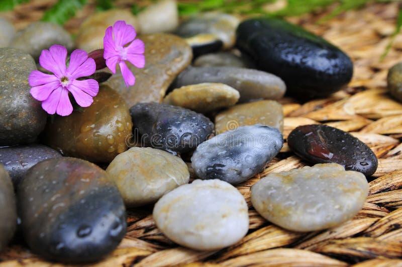 Il Wellness pianta la pietra immagini stock