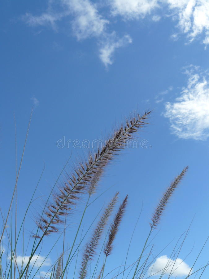 Il wildflower dell'erbaccia sotto il cielo blu fotografie stock libere da diritti