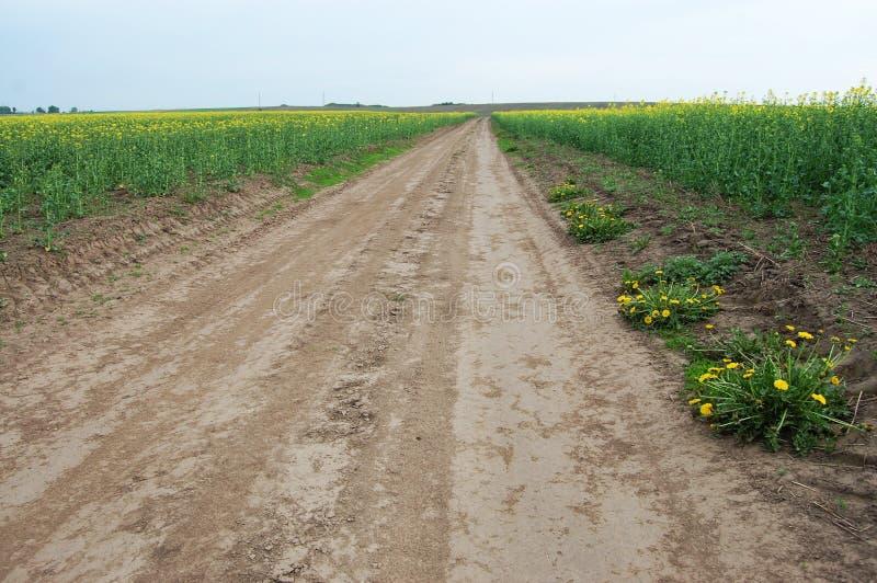 Il y a une route entre le champ de la graine de colza photo stock