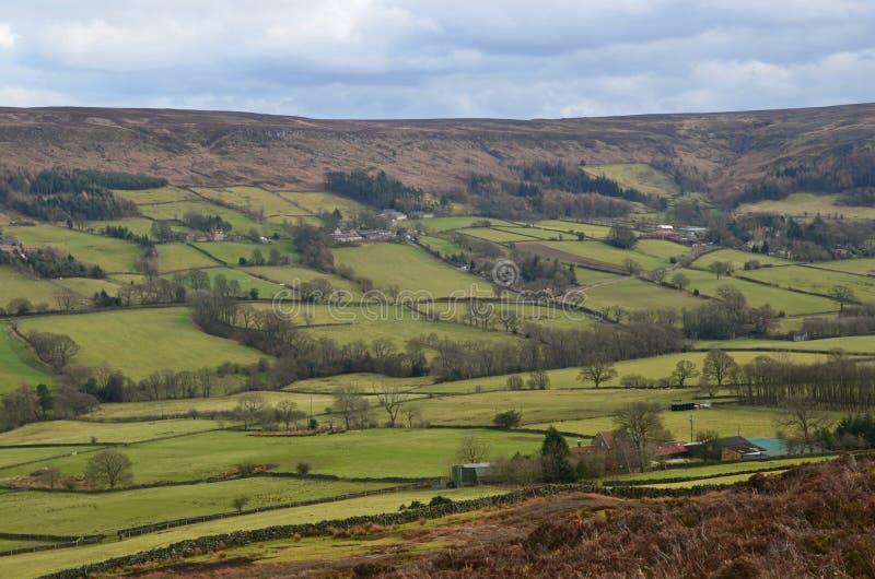 Il Yorkshire attracca fotografie stock libere da diritti