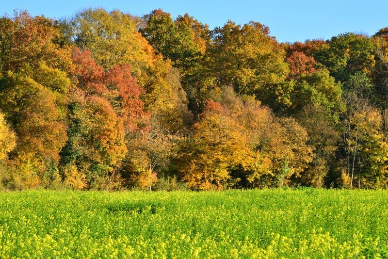 Il Yvelines, il paesaggio pittoresco di autunno del villaggio di Rosay immagini stock libere da diritti