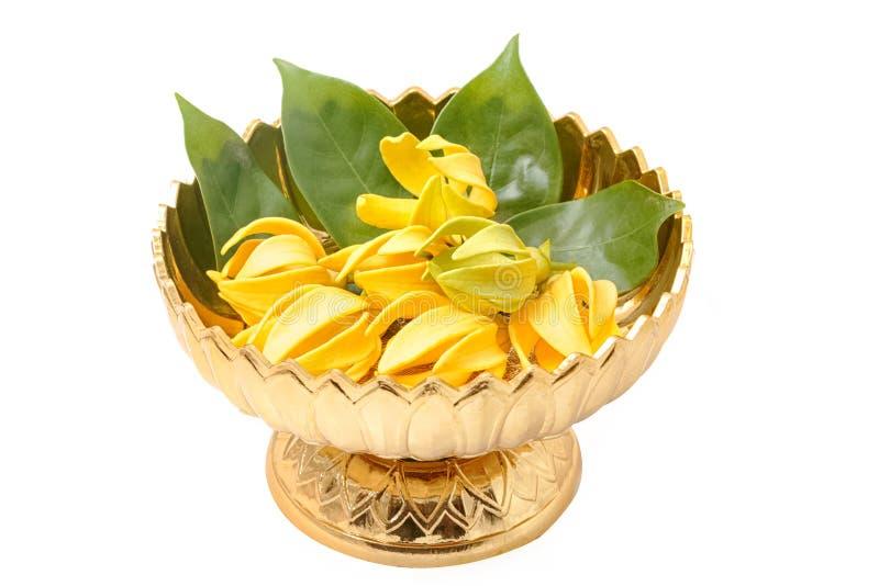 Ilang-Ilang Blume, gelbe wohlriechende Blume lizenzfreie stockfotografie