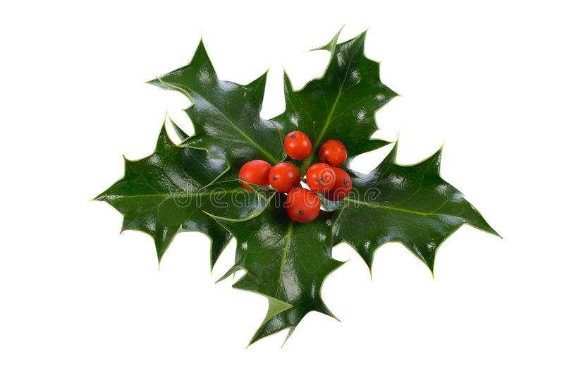 Ilex, azevinho, decoração do Natal foto de stock royalty free