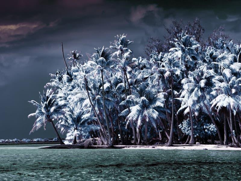 A ilha com as palmeiras ao mar, uma foto infravermelha. Paisagem tropical do mar foto de stock