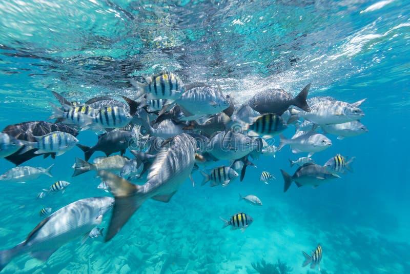 Ilha de Bermuda imagens de stock royalty free