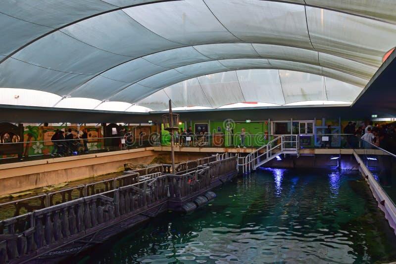 Ilha de Dugong na vida marinha Sydney Aquarium onde há porco e Wuru de dois dugongs a saber imagem de stock royalty free