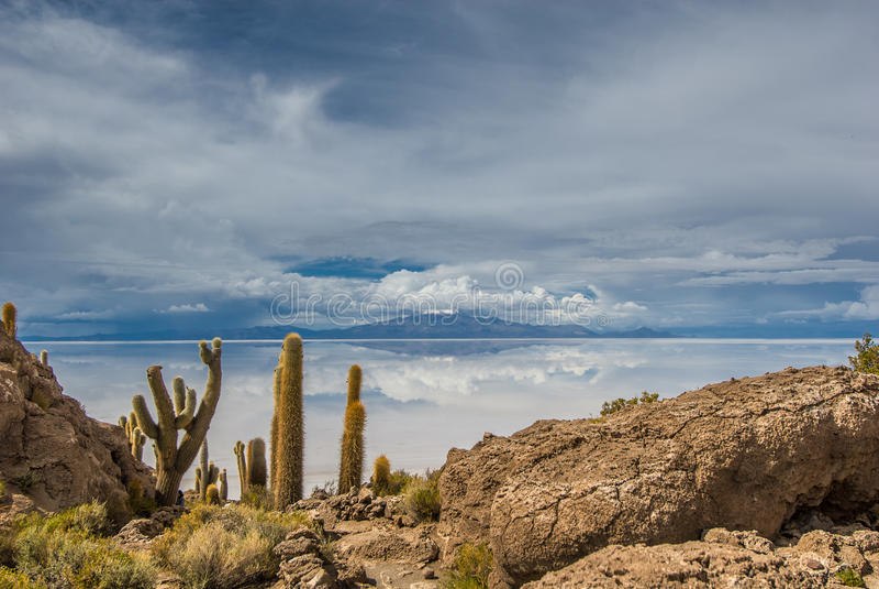Ilha de Incahuasi, Salar de Uyuni, Bolívia fotografia de stock royalty free