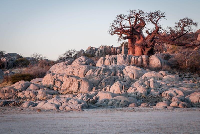 Ilha de Kubu, Botswana imagens de stock royalty free