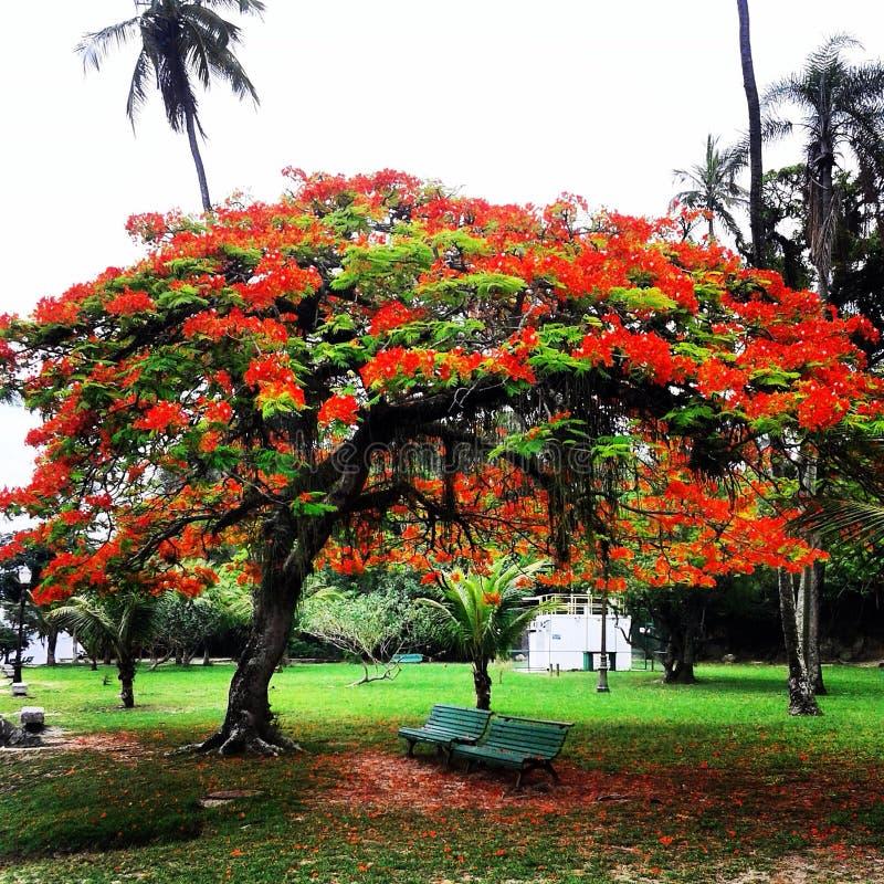 Ilha De paquetà ¡ zdjęcia stock
