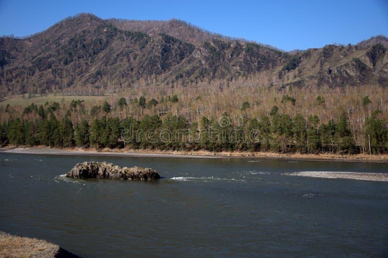 Ilha de pedra no centro da cama de um rio da montanha Altai, Sib?ria, R?ssia Paisagem fotografia de stock