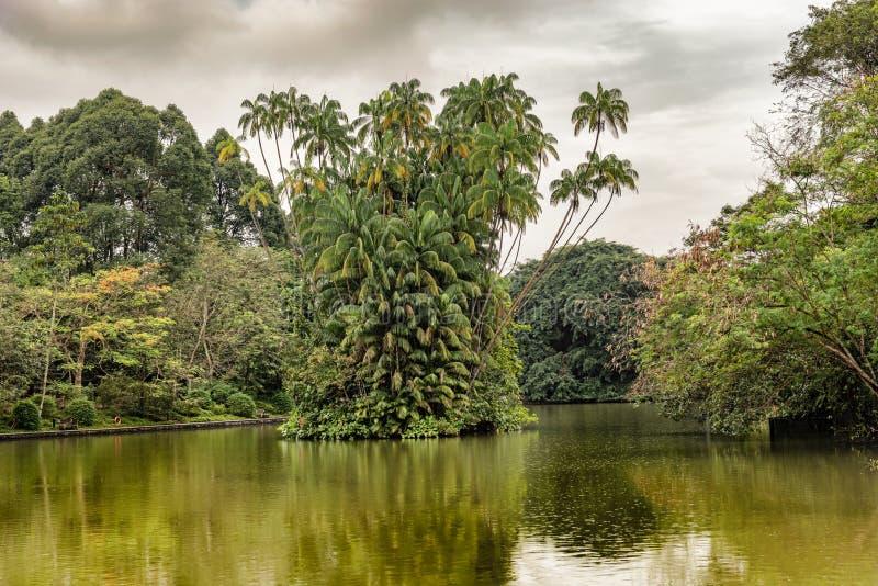 Ilha do cacho da palma em O Lago das Cisnes em jardins botânicos de Singapura fotografia de stock royalty free