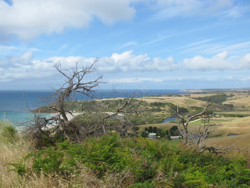 Ilha do canguru fotos de stock royalty free