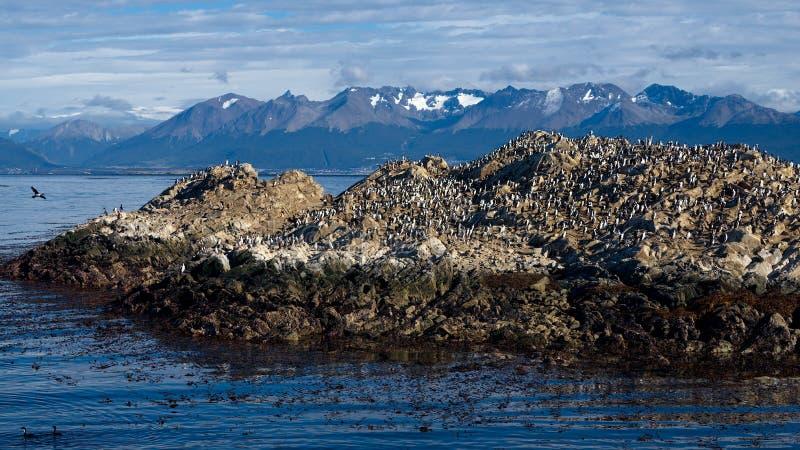 Ilha dos pássaros, navegação através do canal do lebreiro, Tierra del Fuego foto de stock