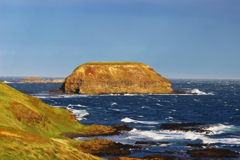 Ilha e oceano selvagens na ilha de Phillip fotografia de stock