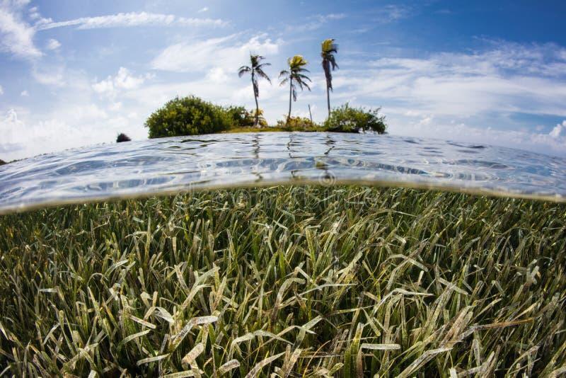 Ilha e prado tropicais do plâncton vegetal no mar das caraíbas fotografia de stock royalty free