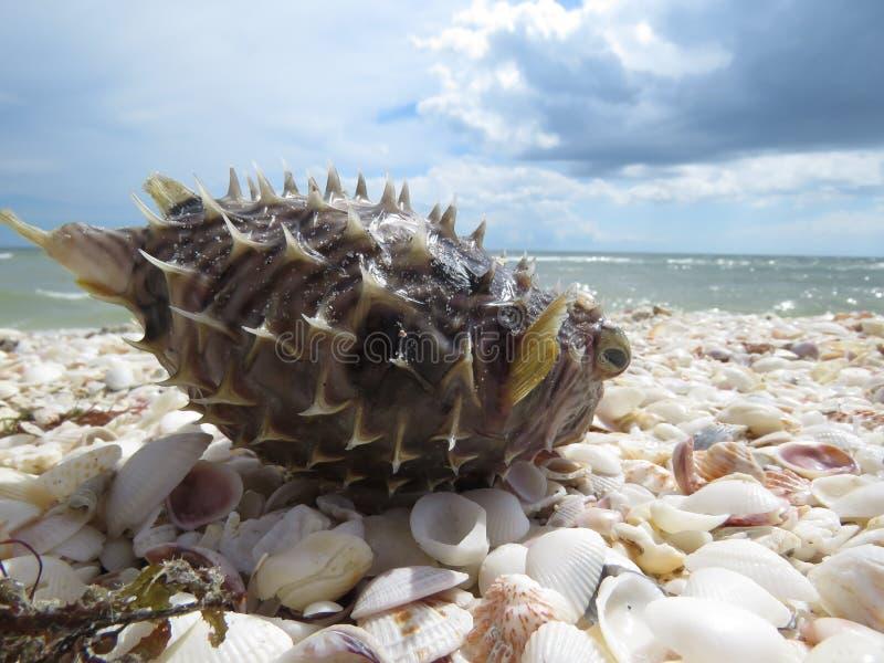 Ilha Florida de Sanibel da maré vermelha fotografia de stock royalty free