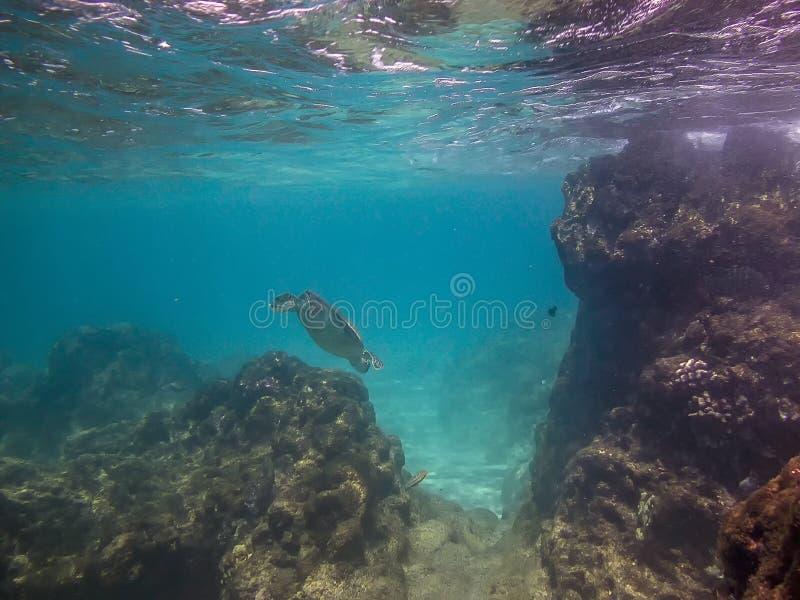 Ilha grande Havaí do recife de corais imagens de stock royalty free