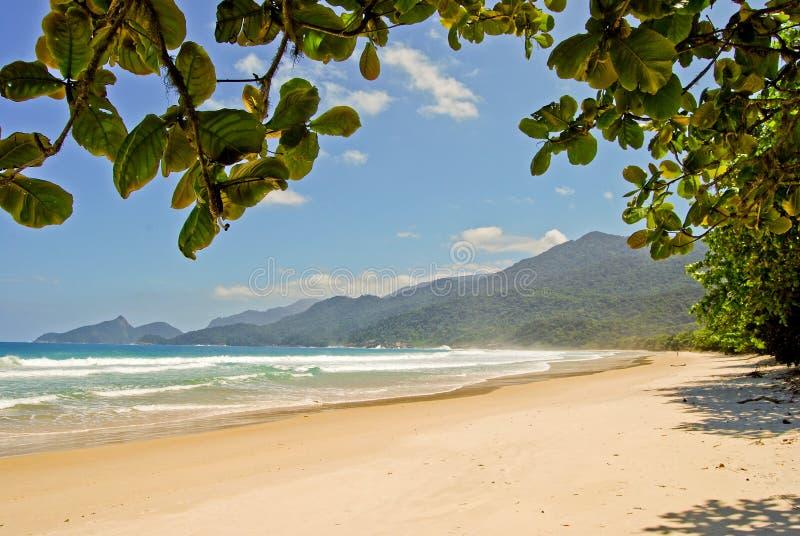 Download Ilha Grande: Plażowy Praia Lopes Mendes, Rio De Janeiro Stan, Brazylia Obraz Stock - Obraz złożonej z plaża, palma: 53776891