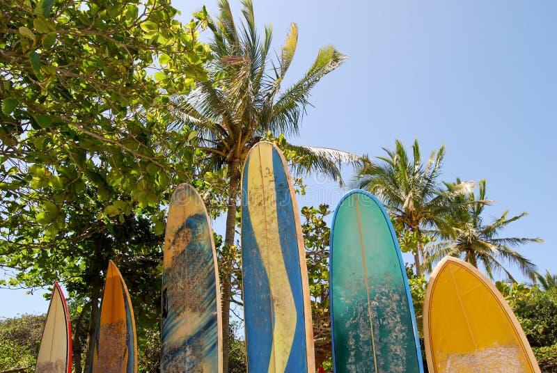 Ilha Grande: Surfboards at beach Praia Lopes Mendes, Rio de Janeiro state, Brazil. Ilha Grande: Beach Praia Lopes Mendes, Rio de Janeiro state, Brazil - South stock image