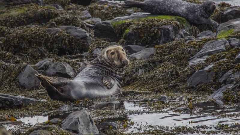 Ilha Irlanda do Norte de Rathlin foto de stock