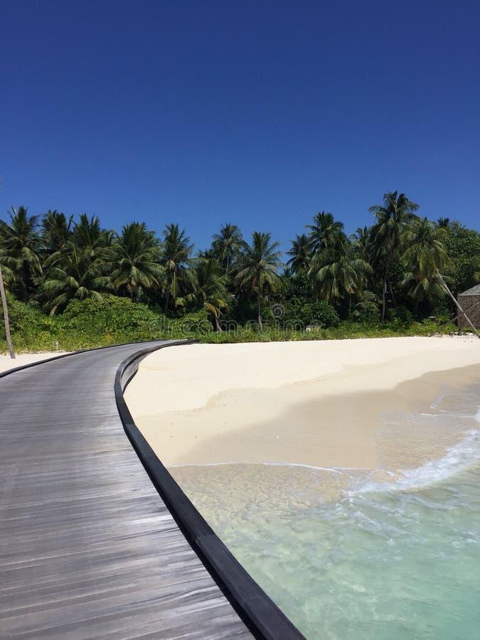 Ilha Maldivas do coco fotos de stock royalty free