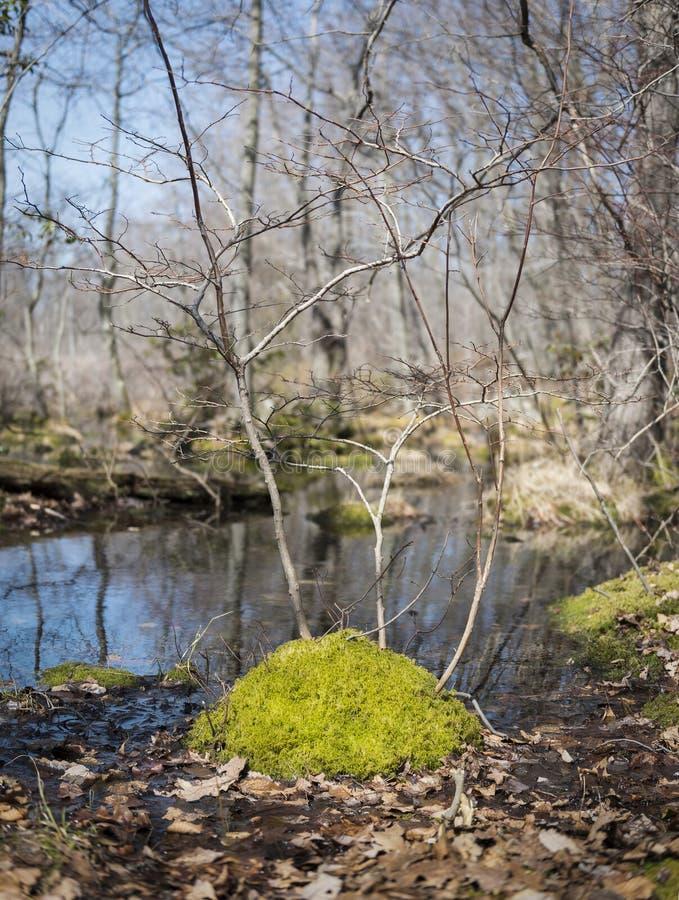Ilha musgoso pequena em um córrego foto de stock