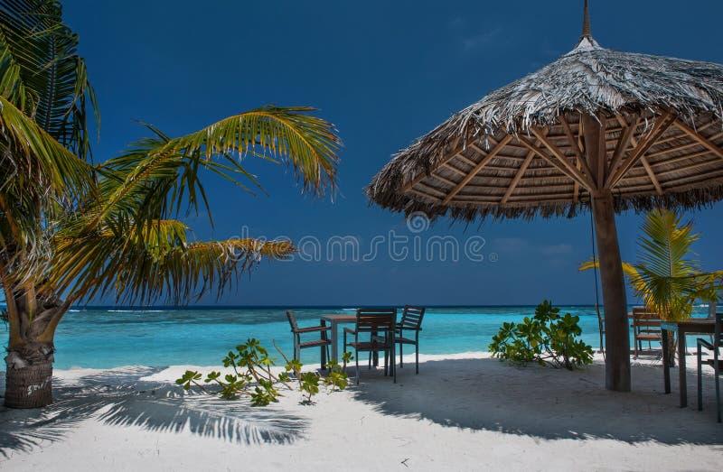 Ilha tropical com palmeiras e a praia vibrante surpreendente em Maldivas Parasol branco no atol romântico tropical de Maldivas do imagem de stock