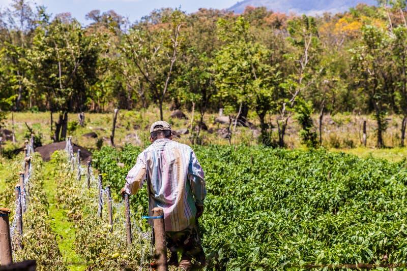 Ilha vulcânica de Ometepe imagem de stock