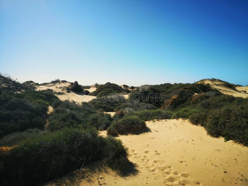 Ilhas Canárias, Lanzarote fotos de stock