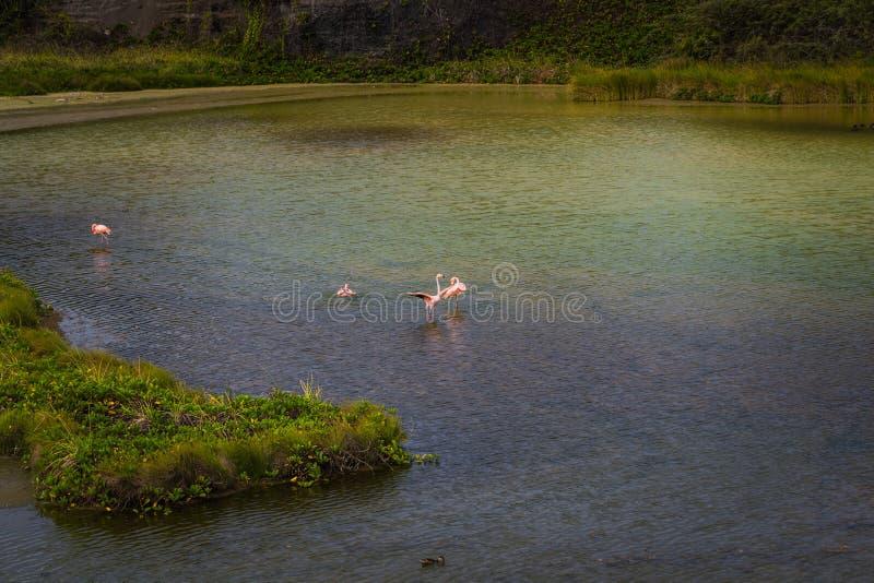 Ilhas Galápagos - 25 de agosto de 2017: Paisagem da baía de Flamingo nas Ilhas Isabela Galápagos, Equador imagens de stock royalty free