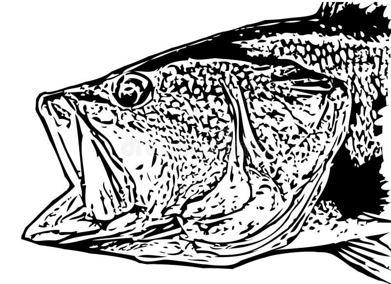 IlIlustration largemouth basu ryby głowa na białym backgorund ilustracja wektor