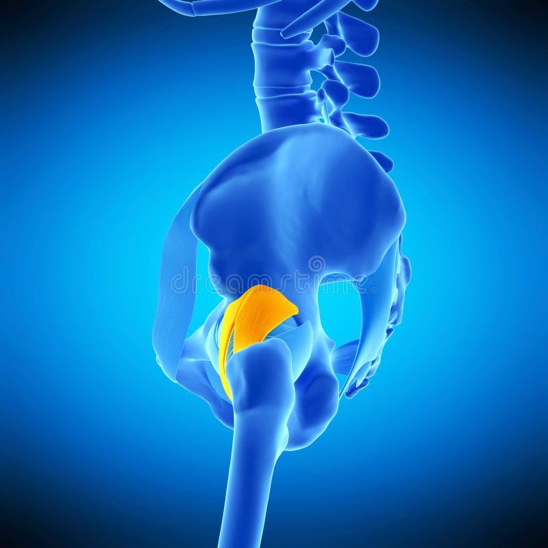 The iliofemoral ligament stock illustration. Illustration of ...
