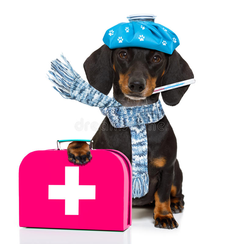 Ill sick dog with illness stock photography