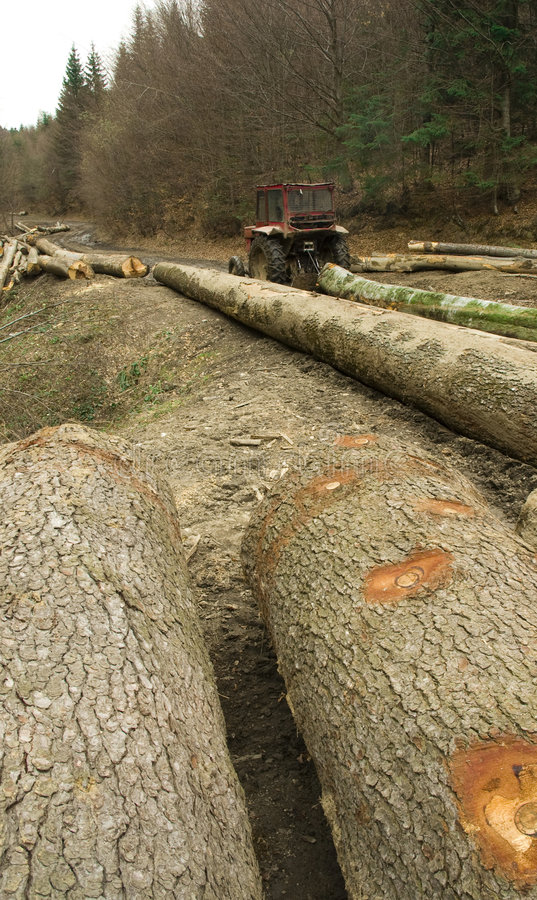 Illegal deforestation stock image