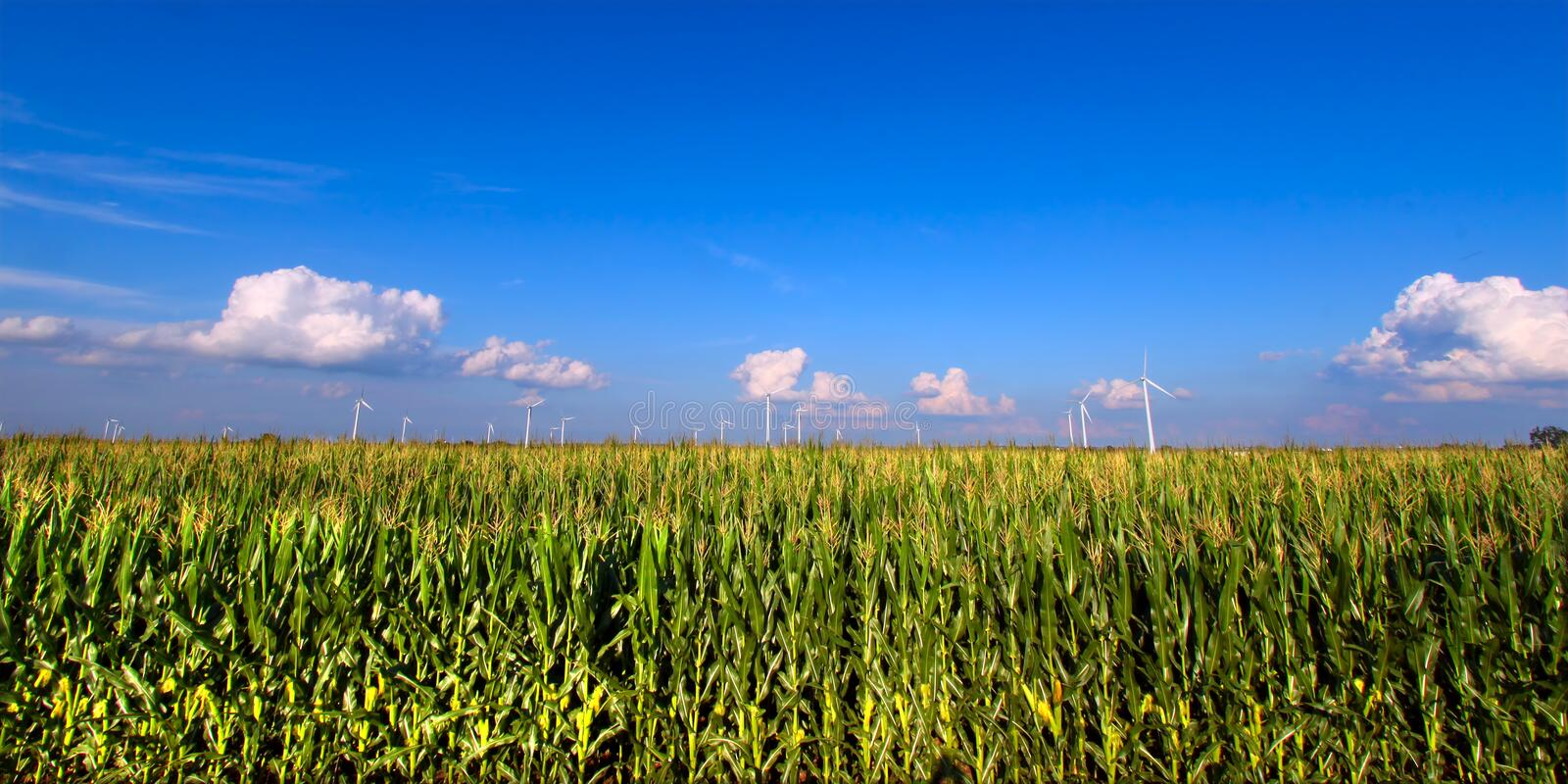 Download Illinois Agricultural Land stock photo. Image of grow - 25002248