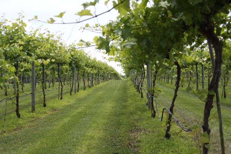 Illinois vinodlingdropp 2019 royaltyfria foton