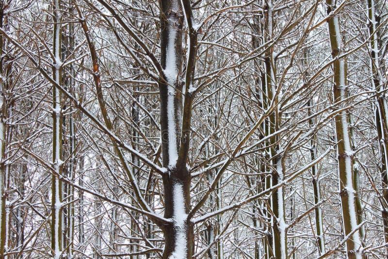 Illinois zimy lasu krajobraz obrazy stock