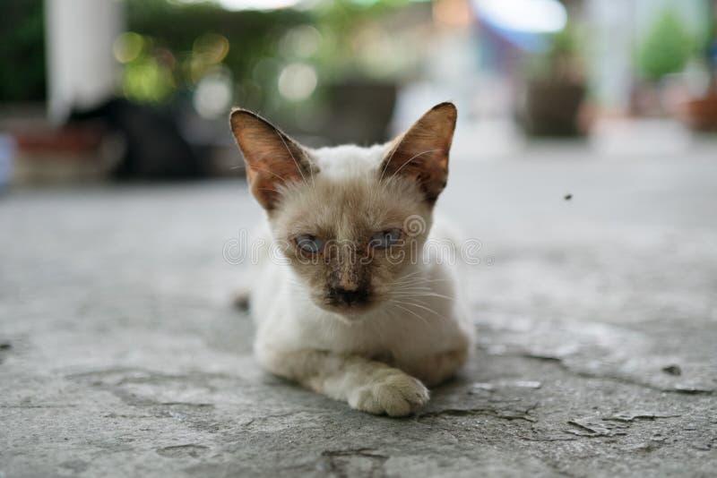 Illness stray cat royalty free stock photo