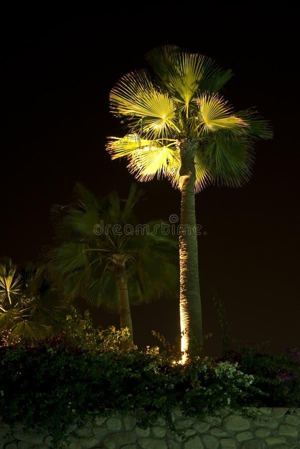 Illuminated palm tree stock photos