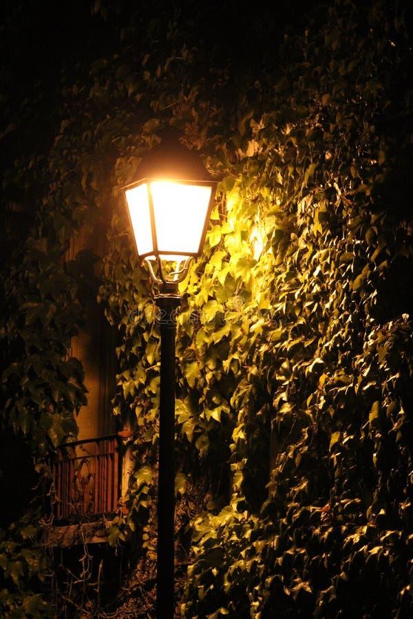 Illuminated street lamp in the night stock photo