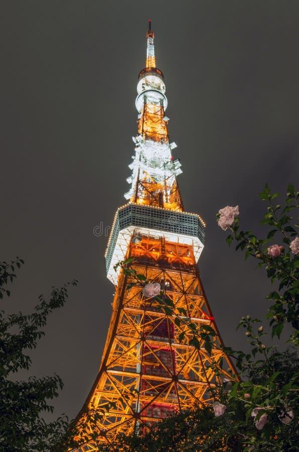 Illuminated tower at night royalty free stock photos