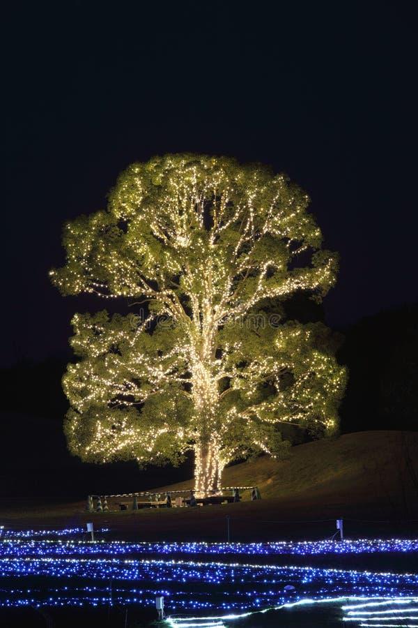Illuminated Tree Royalty Free Stock Photos