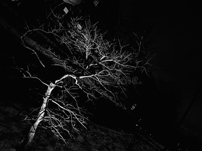 Illuminated tree at night stock images