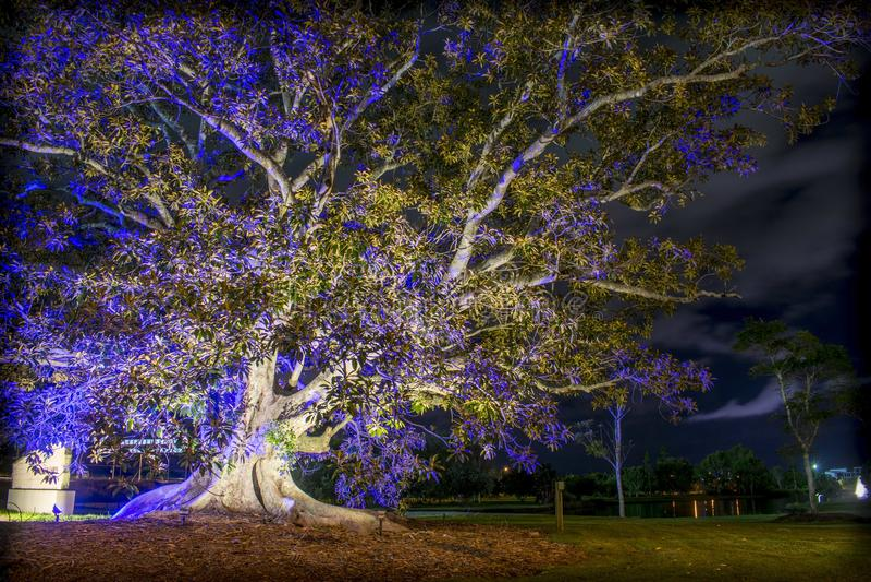 Illuminated Tree Outside Of Emerald Lakes royalty free stock photos