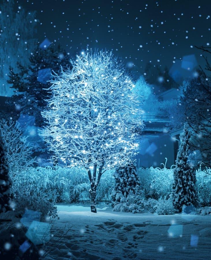 Free Illuminated Tree Winter Garden Snowfall Fantasy Stock Photos - 37359333