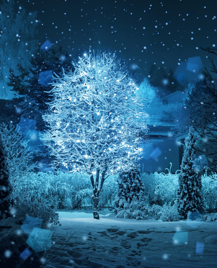 Illuminated tree winter garden snowfall fantasy stock photos