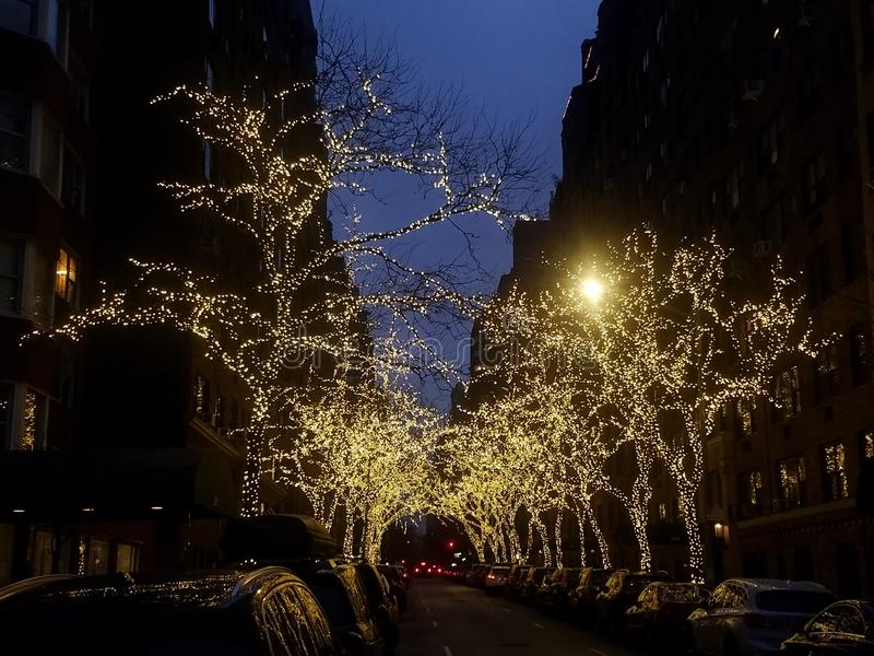 Illuminated trees on tree lined street at dusk royalty free stock images